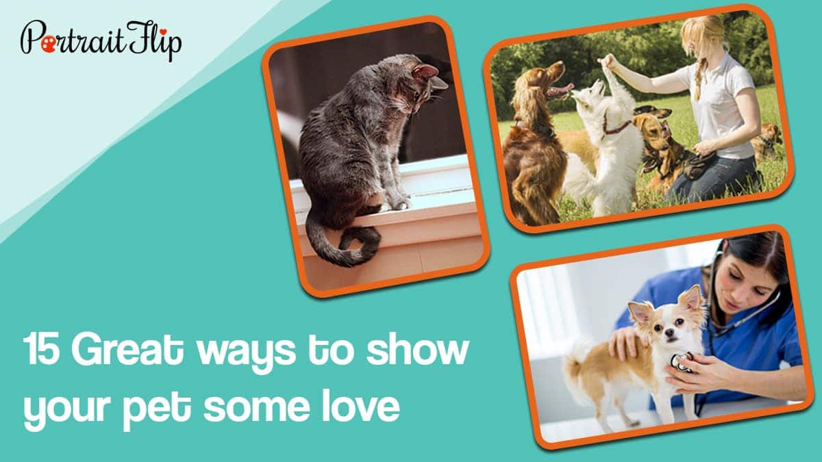 15 great ways to show your pet some love