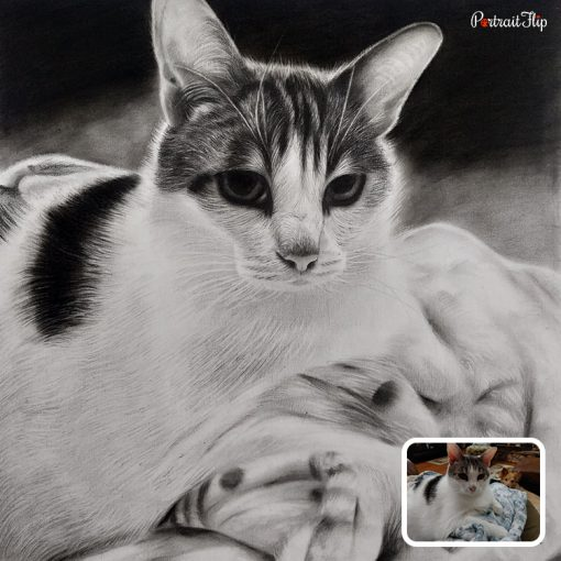 Pet Pencil Sketch From Photo
