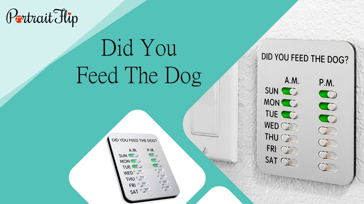 Did you feed the dog