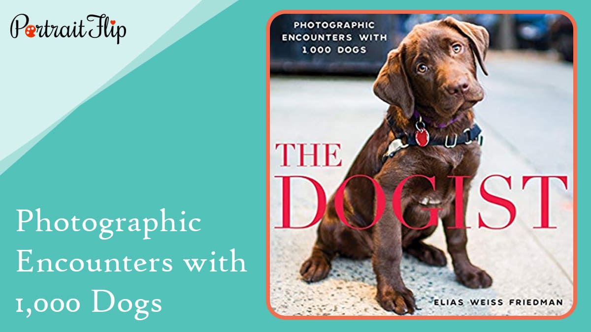 Photographic encounters with 1000 dogs