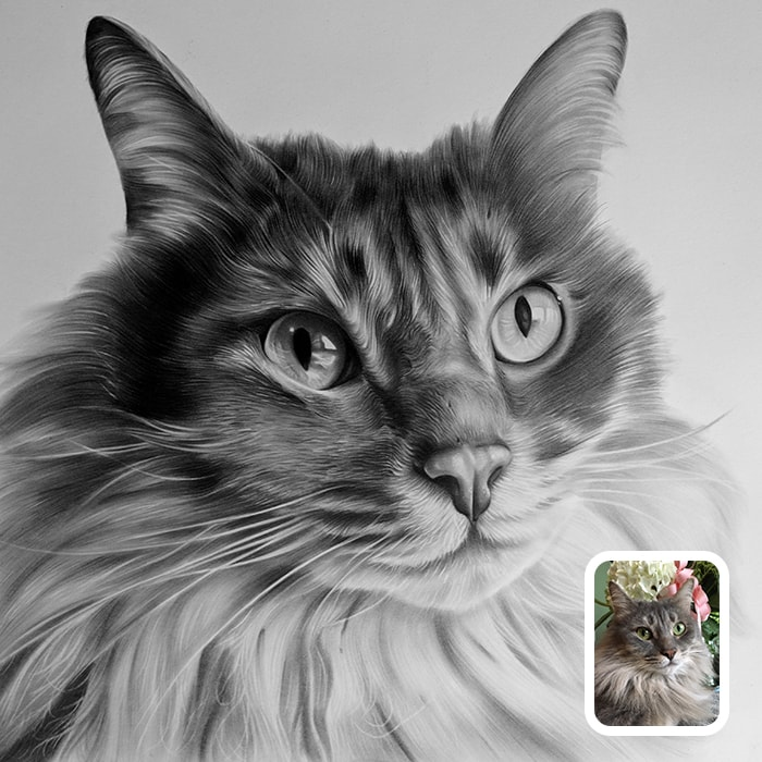 cat charcoal drawing