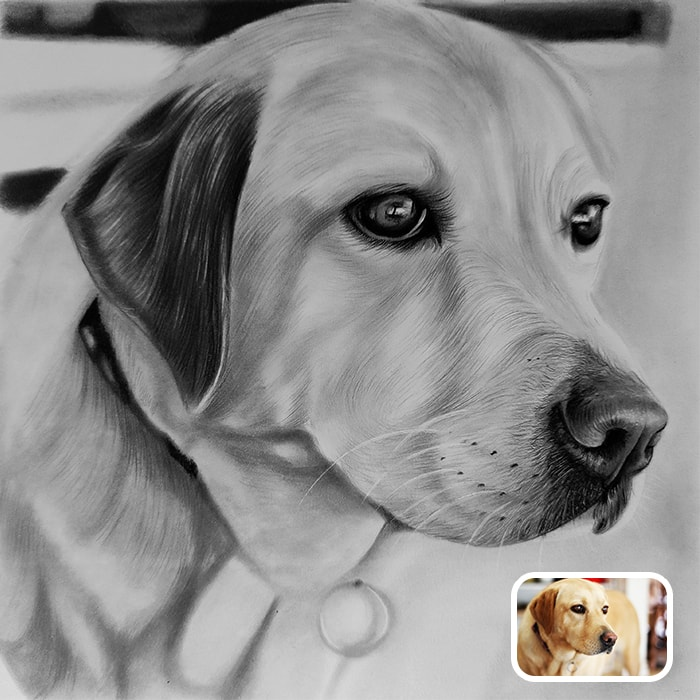 dog pencil portrait