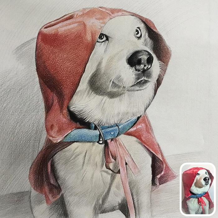 dog colored pencil portrait