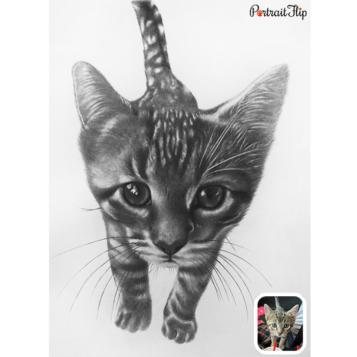 walking cat charcoal painting