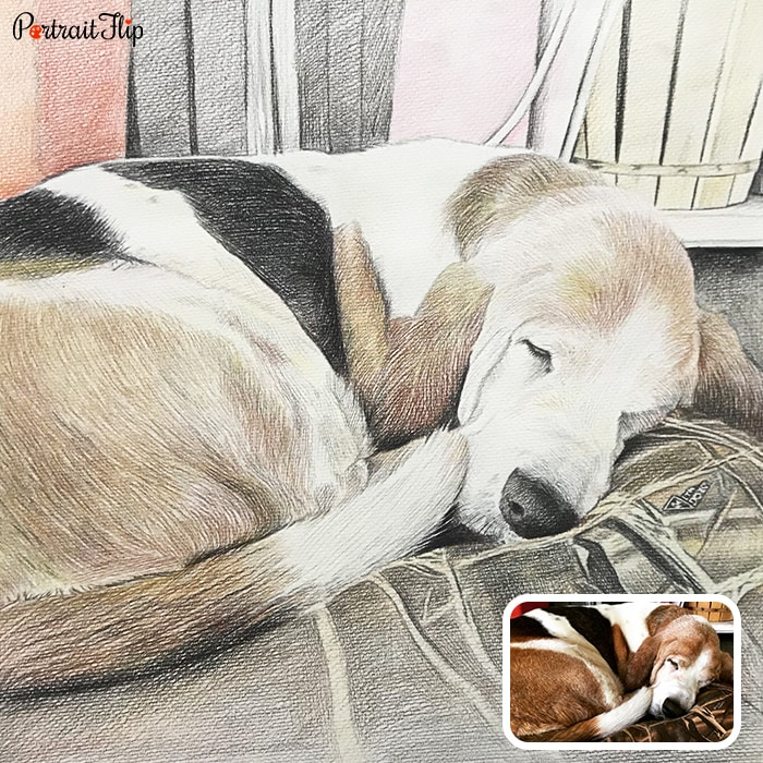 sleeping dog colored pencil portrait