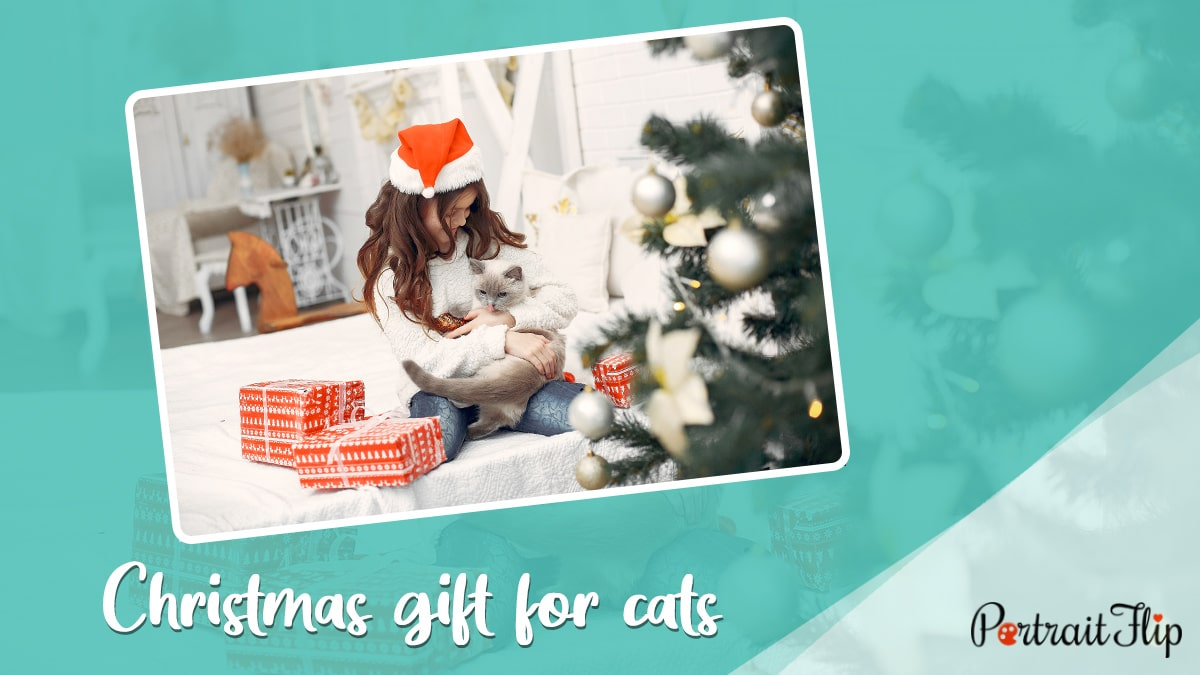 Christmas gift for pets cats