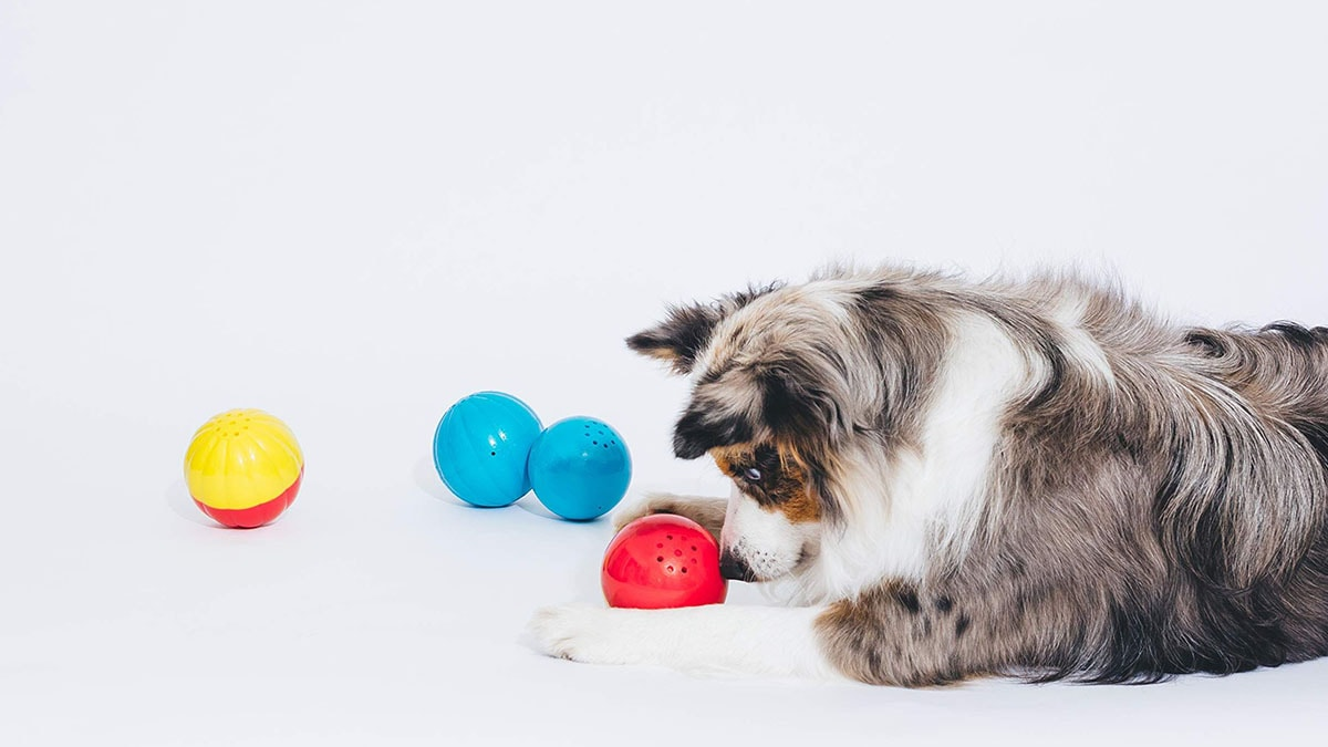 A dog with multicolored balls on a white background