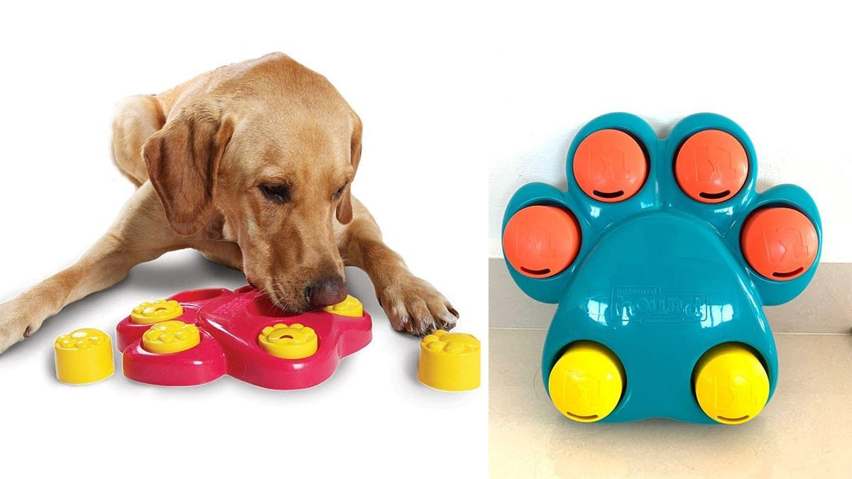 A Labrador dog playing with Outward hound puzzle on a white background
