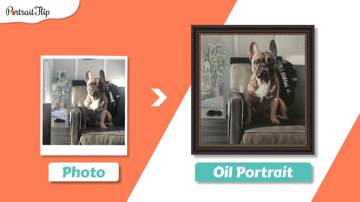 Dog pet portrait from photo of a dog sitting on his couch.