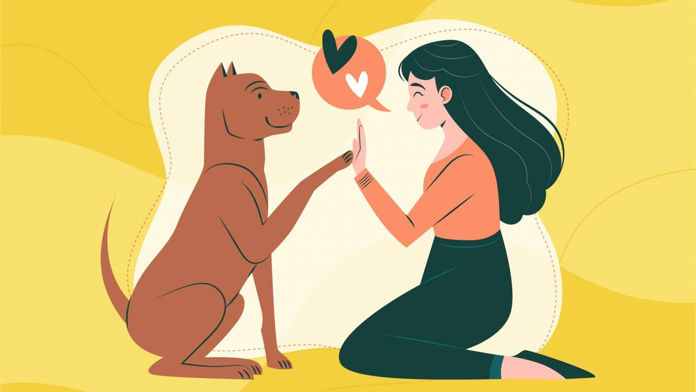 A dog giving a woman high five with a yellow background.
