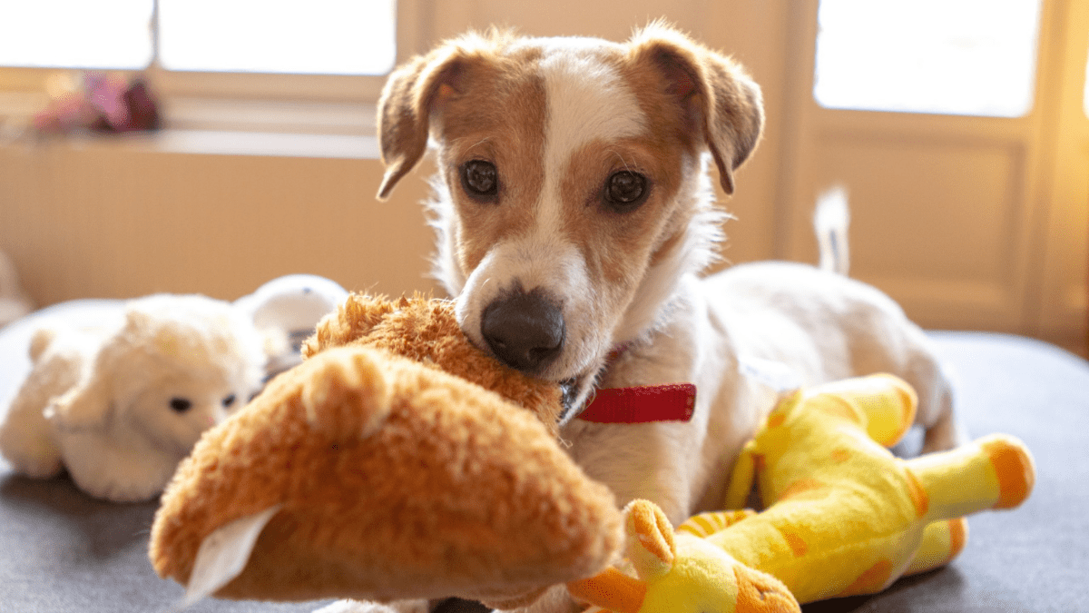 dog playing with eco friendly pet toys
