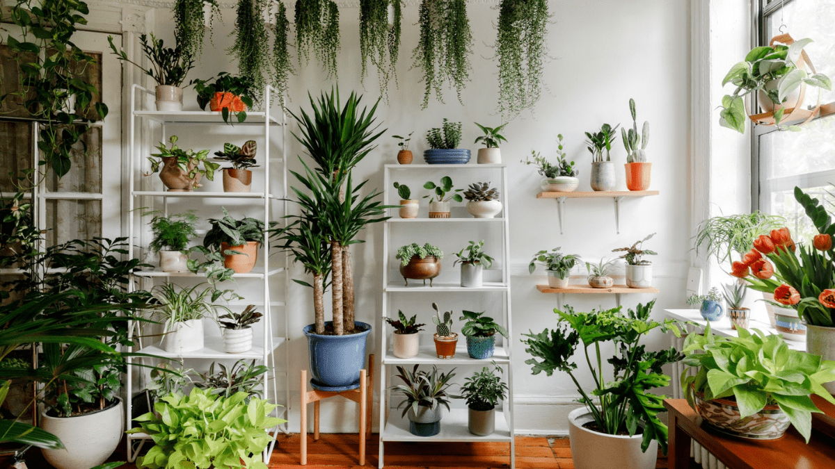 decorated room with Indoor plants