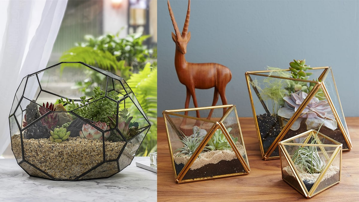 Beautiful Faceted Terrariums on a table.