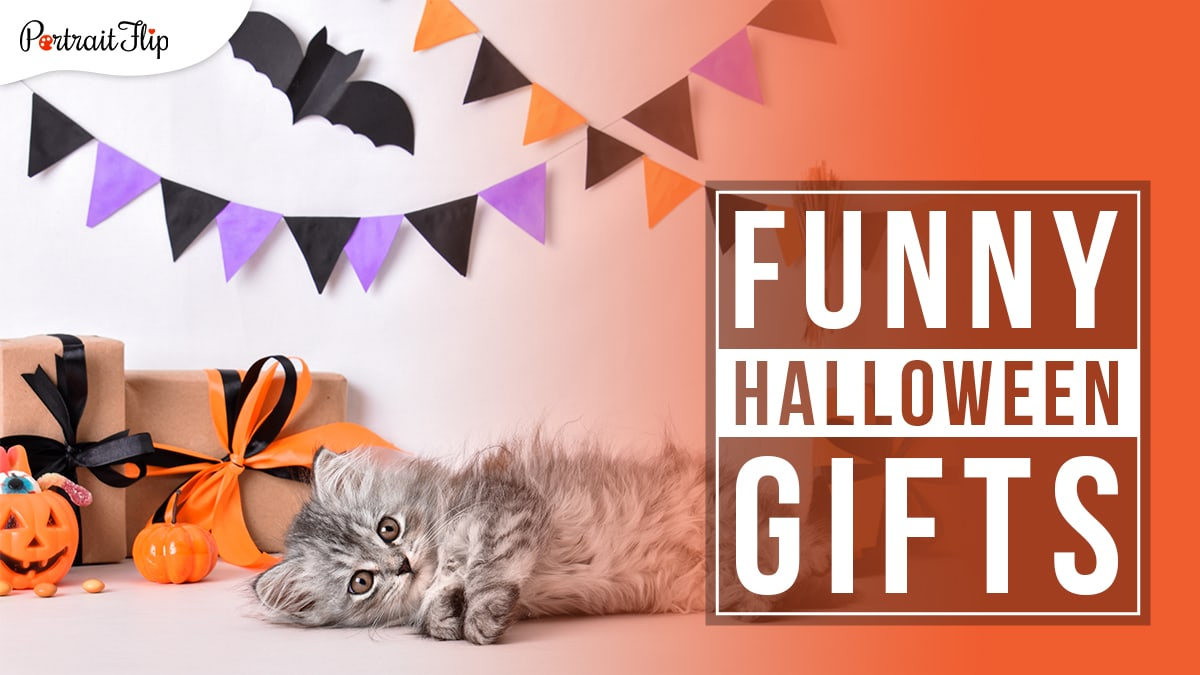 A grey and black kitten lying on a table decorated with a pumpkin and another pumpkin holding candies with gifts wrapped and placed behind the pumpkins. with colorful flag banners on the back wall and a black origami bat stuck on the wall. Funny Halloween Gifts written in a block on the right hand side.