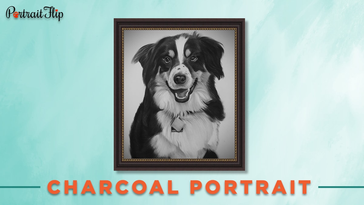 Charcoal portrait of a dog 30 under 30