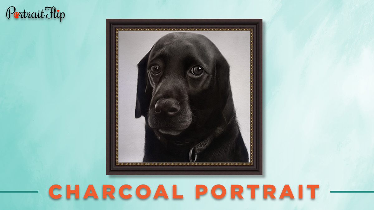 Charcoal portrait from photo of a Labrador.