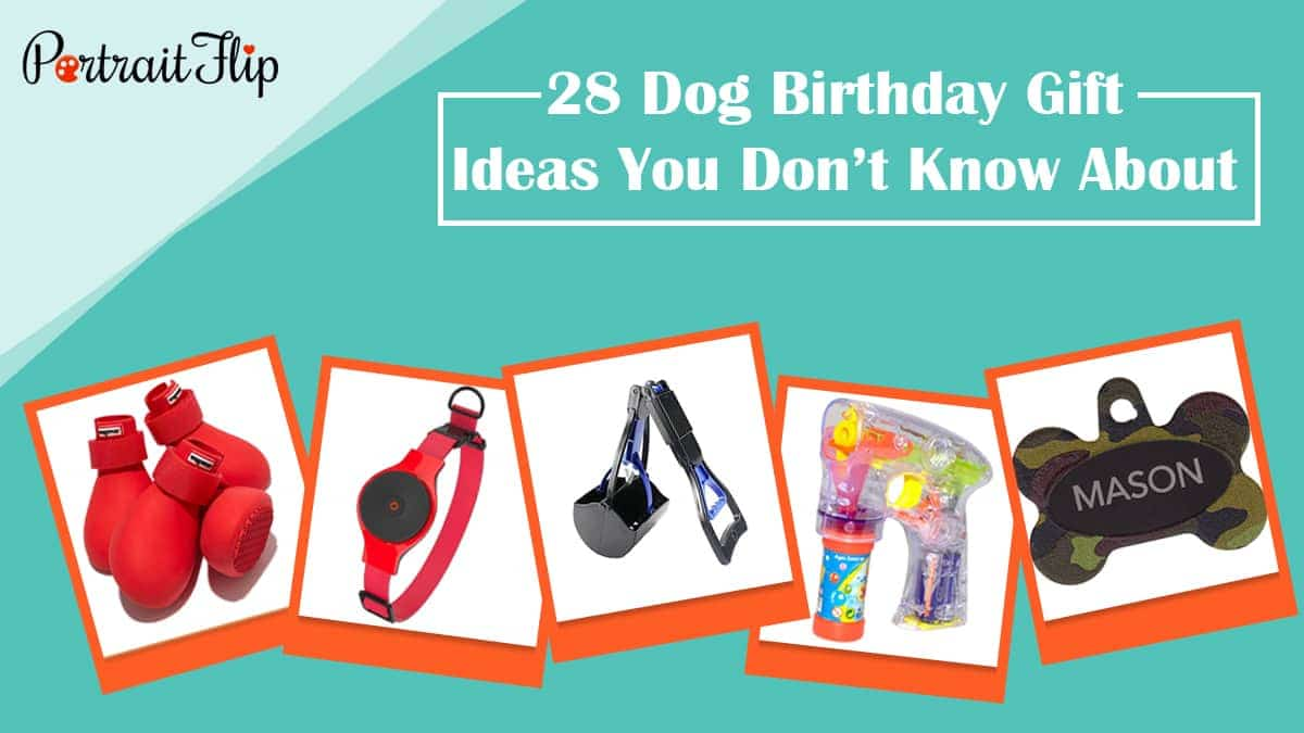 28 dog birthday gift ideas you don't know about
