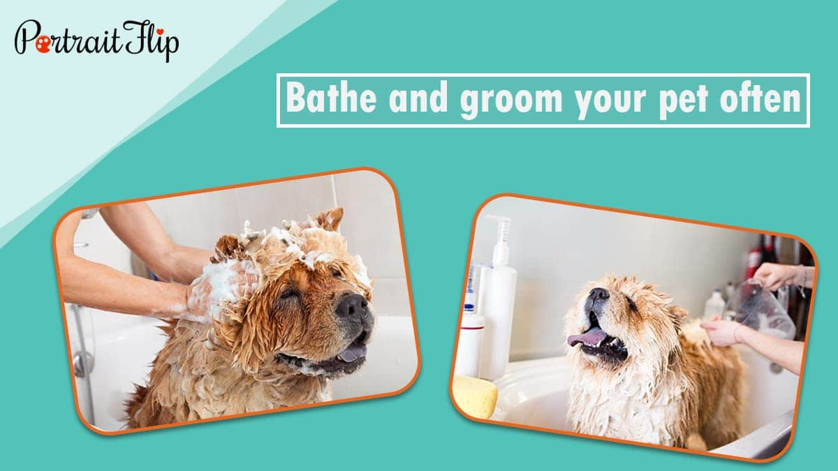 Bathe and groom your pet often