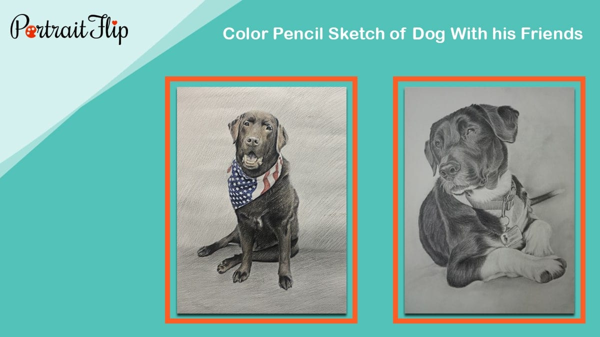 Color pencil sketch of dog with his friends