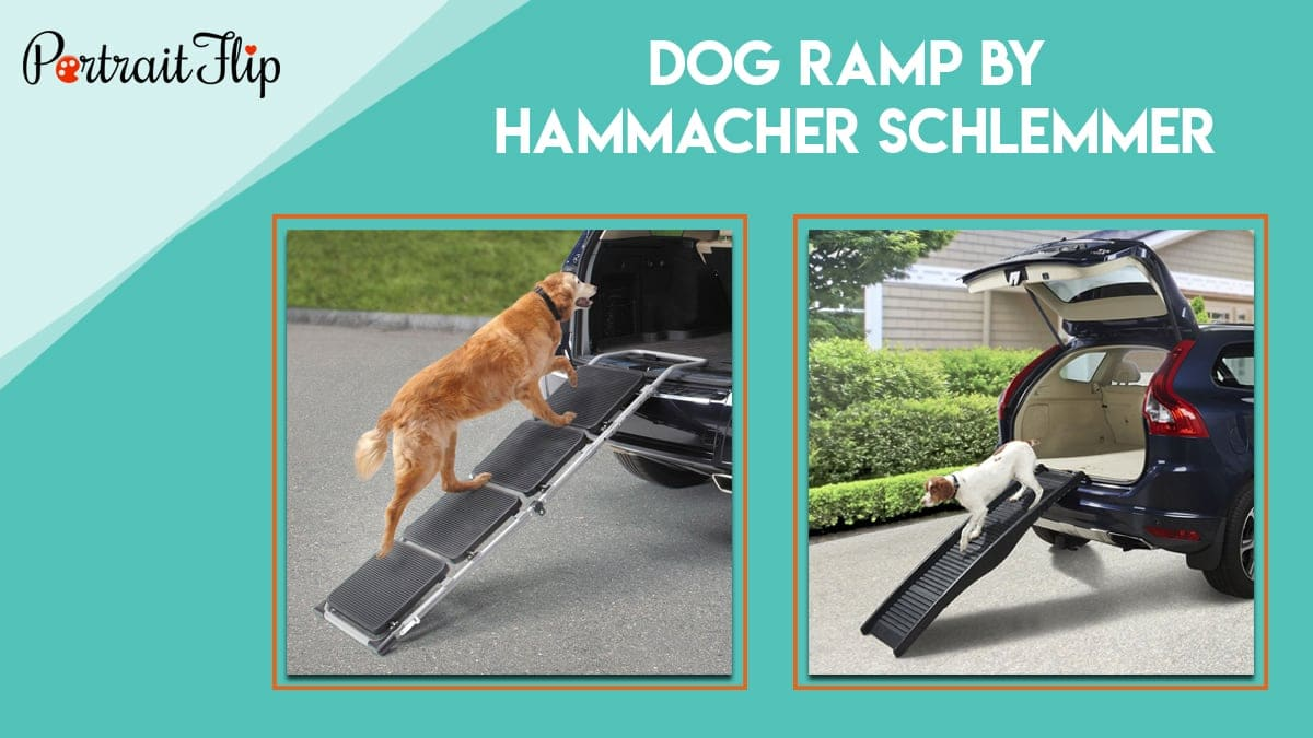 Dog ramp by hammacher schlemmer