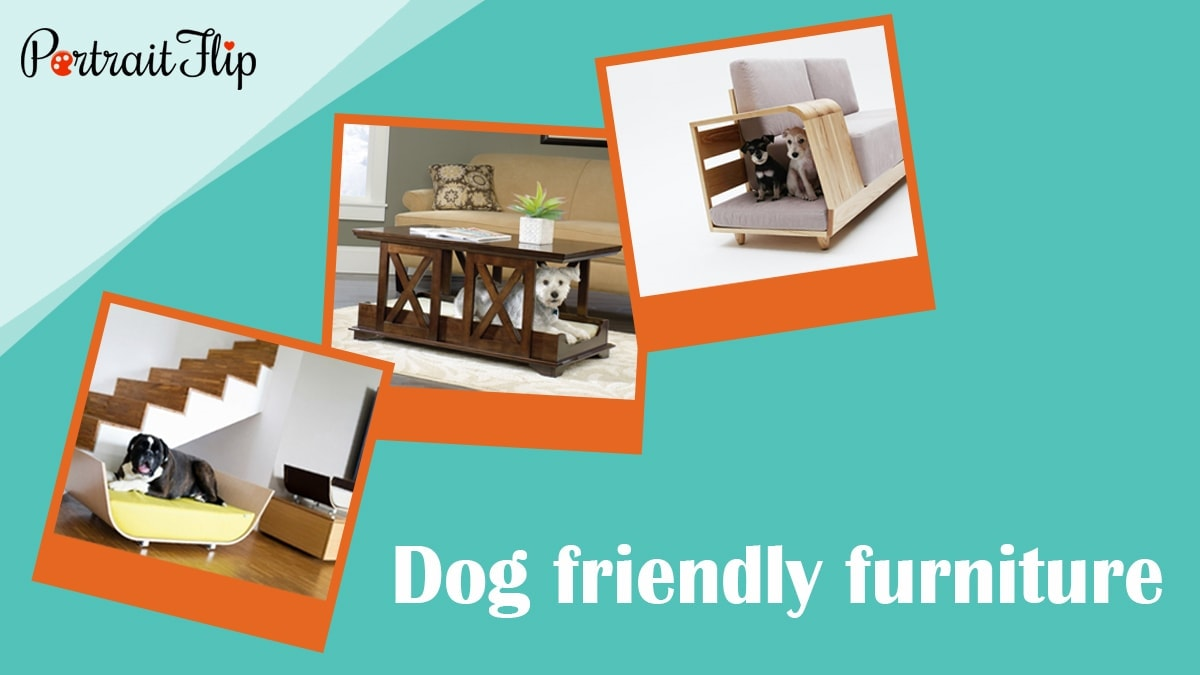 Dog friendly furniture