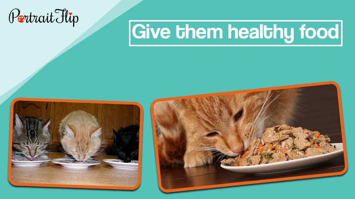 Give them healthy food