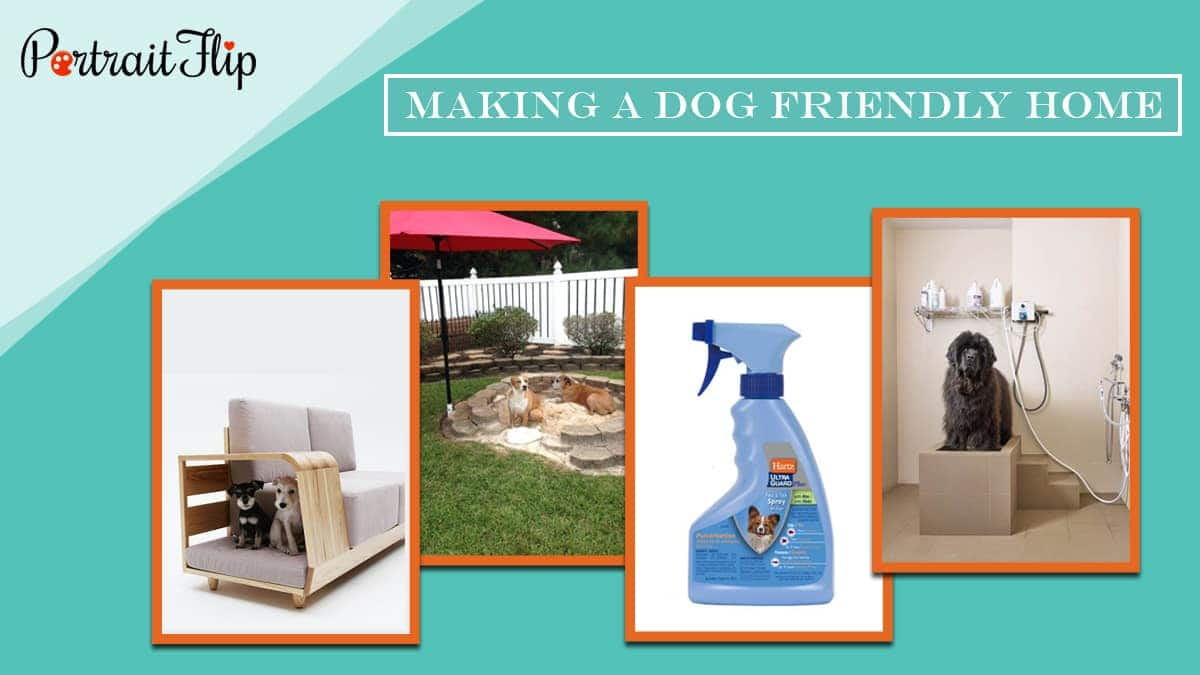 Making a dog friendly home