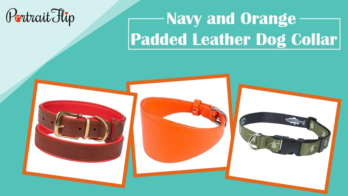Navy and orange padded leather dog collar