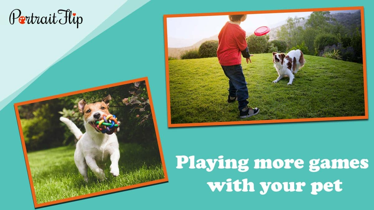 Playing more games with your pet
