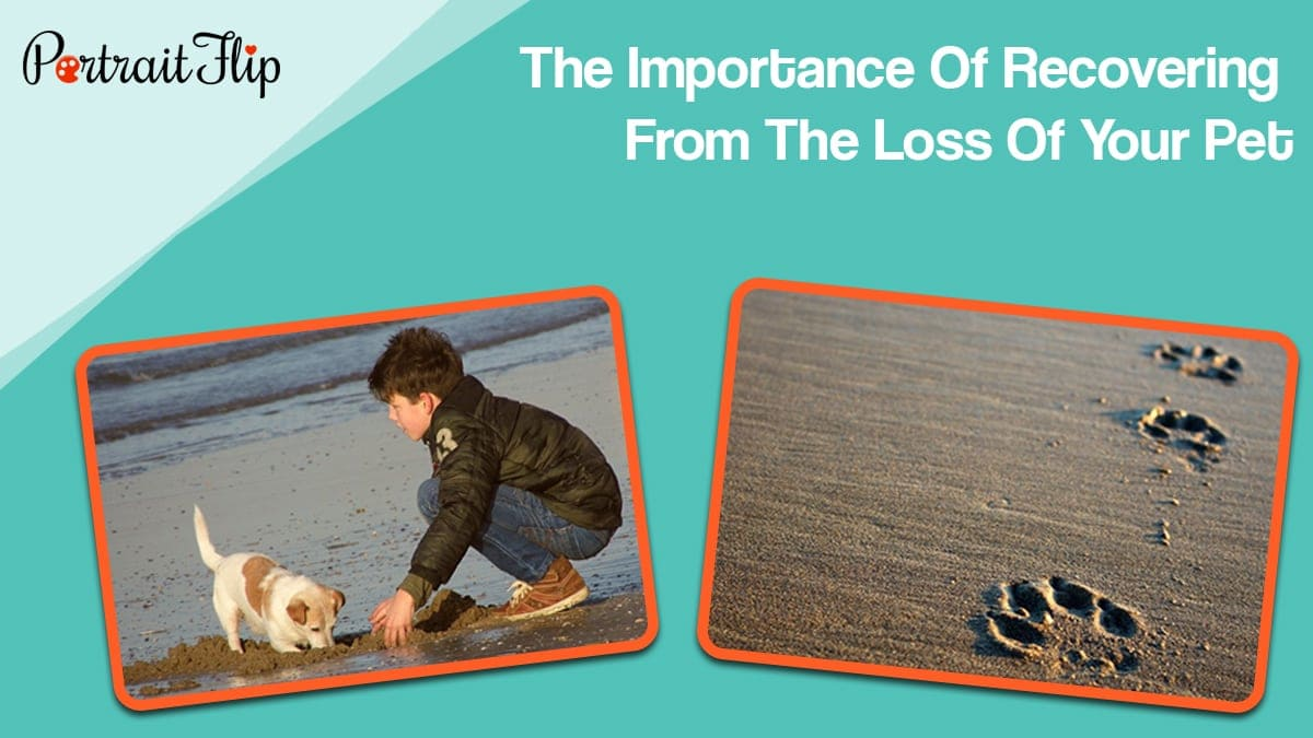 The importance of recovering from the loss of your pet