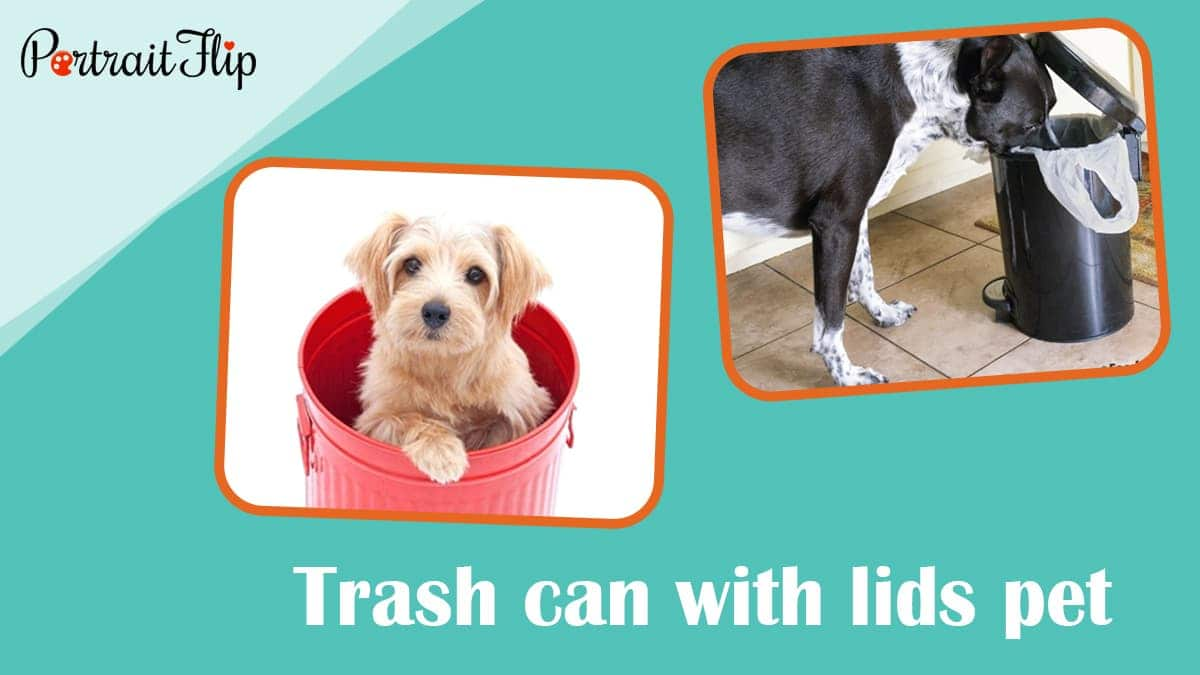 Trash can with lids pet