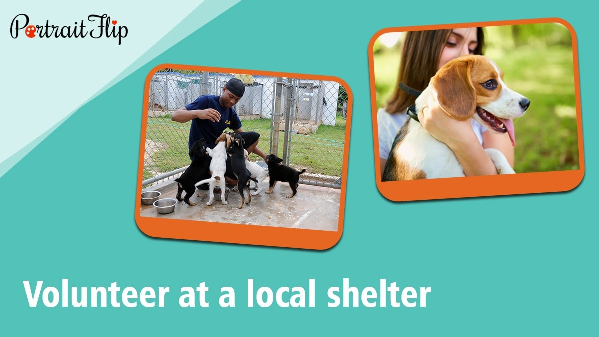 Volunteer at a local shelter